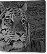 Tiger Bw Canvas Print