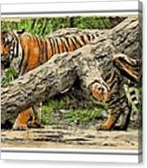 Tiger By The Log Canvas Print