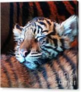 Tiger Cub Nap Canvas Print