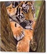 Tiger Cub Painting Canvas Print