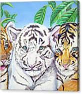 Tiger Cubs Canvas Print
