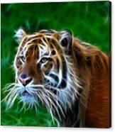 Tiger Dream Canvas Print