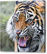 Tiger Growl Canvas Print