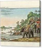 Tiger Hunting On An Indian River Canvas Print