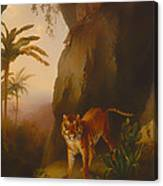 Tiger In A Cave Canvas Print