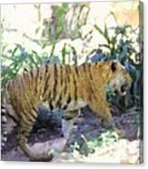 Tiger In Crayon Canvas Print