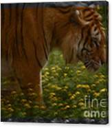 Tiger In The Midst Of Buttercups Canvas Print