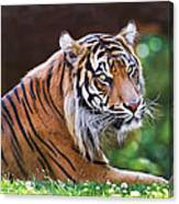 Tiger In The Sun Painting Canvas Print