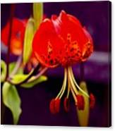 Tiger Lilly In Repose Canvas Print