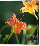Tiger Lily And Bud   # Canvas Print