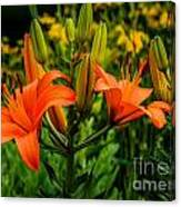 Tiger Lily Blossoms Canvas Print