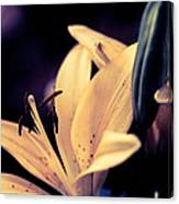 Tiger Lily Blue Canvas Print