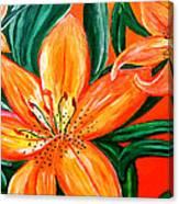 Tiger Lily Trio Canvas Print