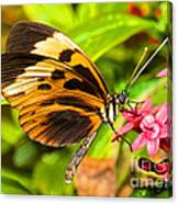Tiger Mimic Butterfly Canvas Print