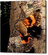 Tiger Moth Flight Canvas Print
