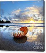 Tiger Nautilus Sunrise Canvas Print