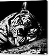 Tiger R And R Black And White Canvas Print
