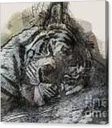 Tiger R And R Canvas Print