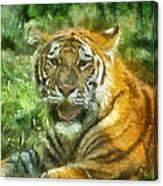 Tiger Resting Photo Art 05 Canvas Print