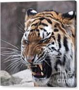 Tiger Smile Canvas Print