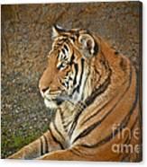Tiger Stair Canvas Print