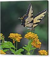 Tiger Swallowtail And Lantana Canvas Print