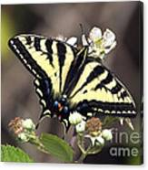 Tiger Swallowtail Butterfly 2a Canvas Print