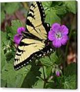 Tiger Swallowtail Butterfly On Geranium Canvas Print