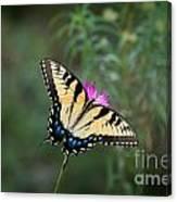 Tiger Swallowtail I Believe Canvas Print