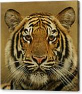 Tiger Tiger Canvas Print