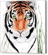 Tiger Tiger Where Canvas Print