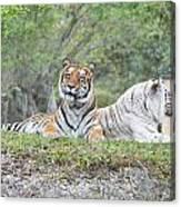 Tiger Time Canvas Print
