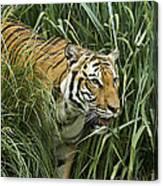 Tiger4 Canvas Print