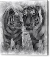 Tigers Photo Art 01 Canvas Print
