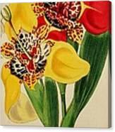 Tigridia Pavonia And Conchiflora Canvas Print