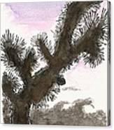 Tijuana Tree Canvas Print