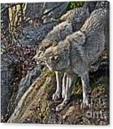 Timber Wolf Pictures 1094 Canvas Print