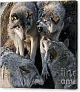 Timber Wolf Pictures 1096 Canvas Print