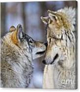 Timber Wolf Pictures 1230 Canvas Print