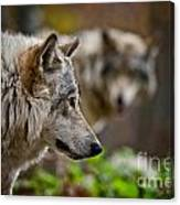 Timber Wolf Pictures 1693 Canvas Print