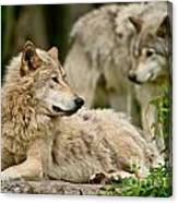 Timber Wolf Pictures 192 Canvas Print