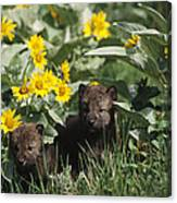 Timber Wolf Pups And Flowers North Canvas Print