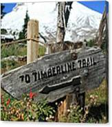 Timberline Trail Canvas Print