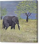 Timbo Canvas Print