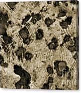 Time Holes - Sepia Tone - Wonderwood Collection - Olympic Peninsula Wa Canvas Print