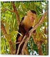 Time To Monkey Around Canvas Print