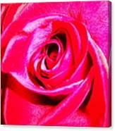 Timeless Red Rose Canvas Print
