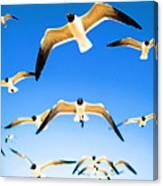 Timeless Seagulls Canvas Print