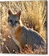Fox Timmy At Sunset Canvas Print