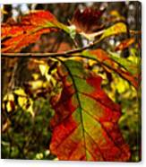Tinged In Red Canvas Print